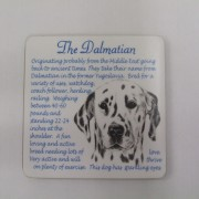 Dalmation - Coaster